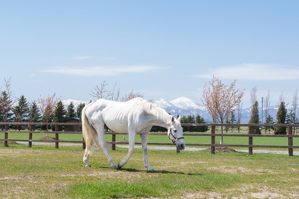 ソメスの馬たち_コロンビア